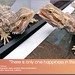 Bearded Dragon Book