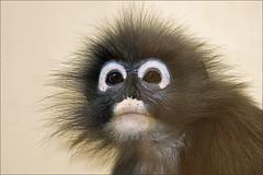 Punk Monkey