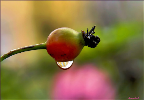 autumn-drop............ | by Hausstaubmilbe ( slow)