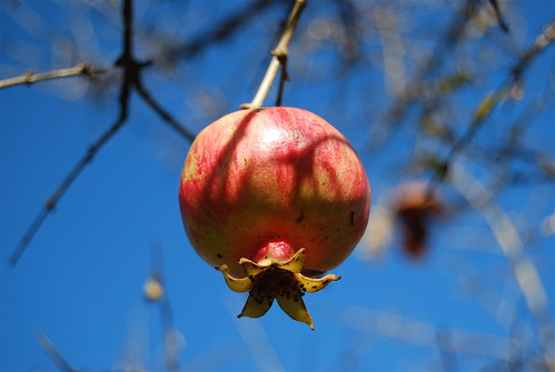 Pomegranate | by La Ola