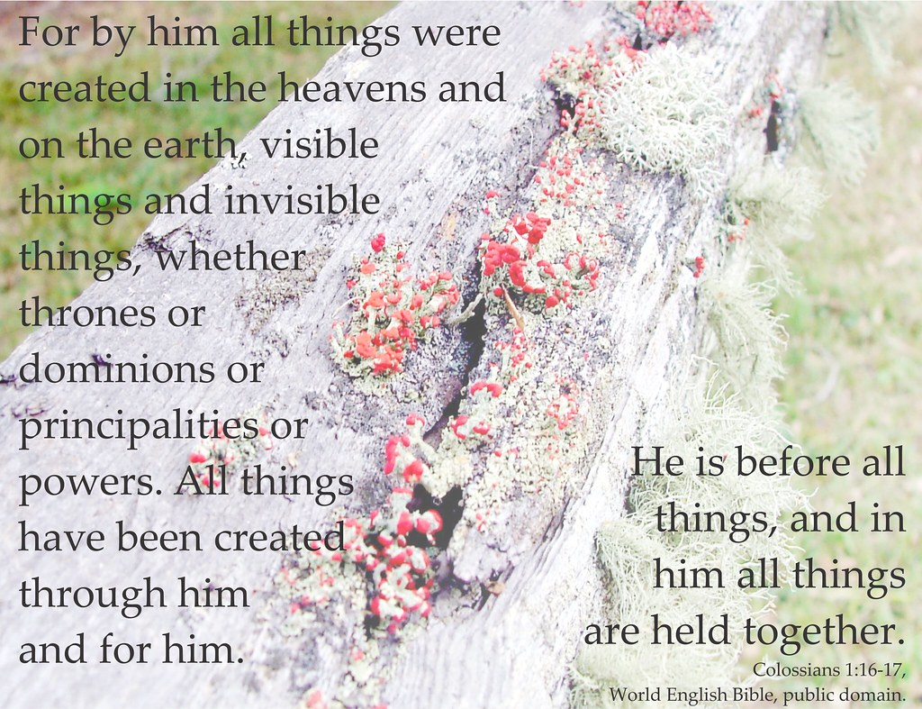 Colossians 1 16 17 Poster With Lichens I Ve Made A Few