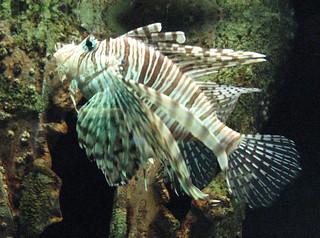 Image Result For Virginia Beach Aquarium