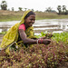 Women Adapt to Climate Change in Odisha