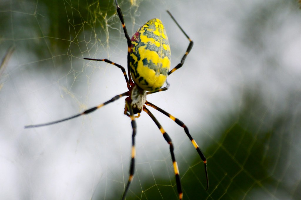 a short report of spiders Ballooning spider tiptoeing on a dandelion seed head  charles darwin  watched with delight as hundreds of tiny spiders dangling from short silk  they  report the first tests of whether electrostatic forces are involved in what.