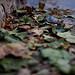 las primeras hojas de otoño