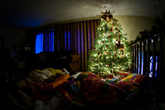 The family Christmas tree | by Rowan Gillson