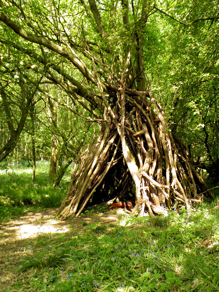Woodland Den Rushbeds Wood Buckinghamshire 4th May