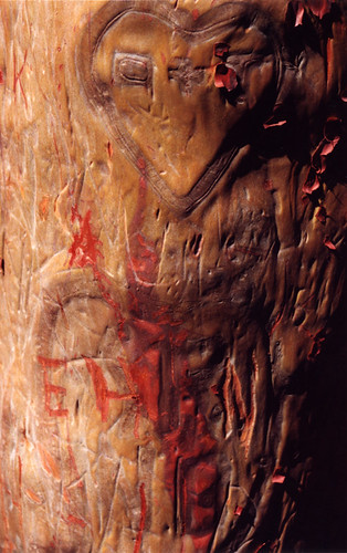 how the bark healed on this Arbutus tree after it was carved with graffiti