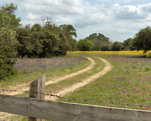 Dirt path in a field of wildflowers | by bunnyfrogs
