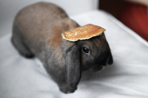 Bunny With A Pancake On Its Head C1staticflickr 3 2587 3991822618 E6b6ca0437