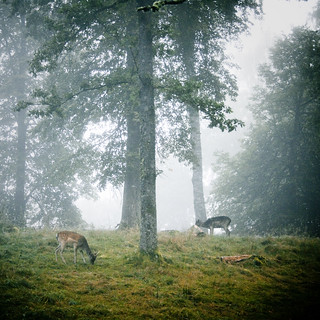 Deer | by hildabordahl