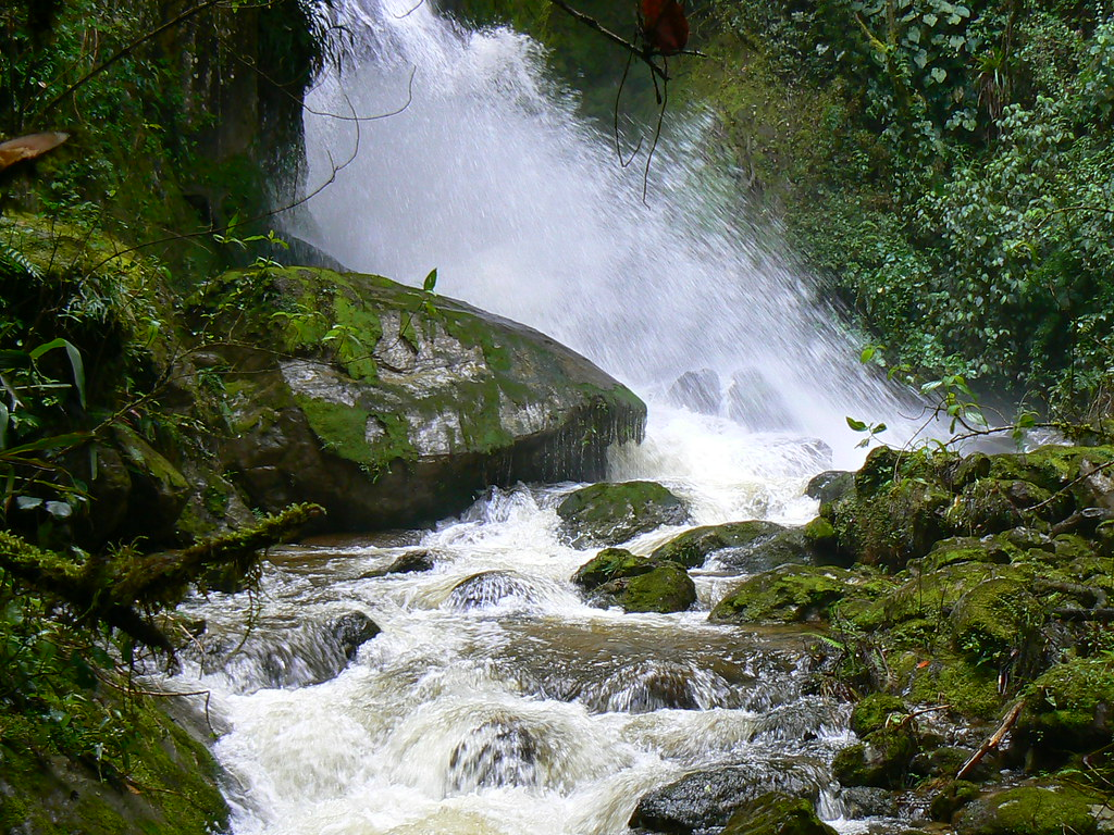 Reserva Loro Coroniazul, Genova, Quindio