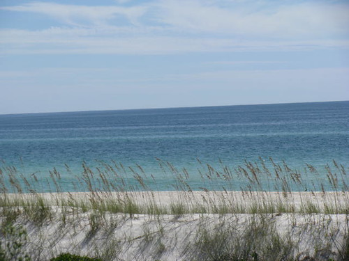 Sea Oats | by Ms. Magoo