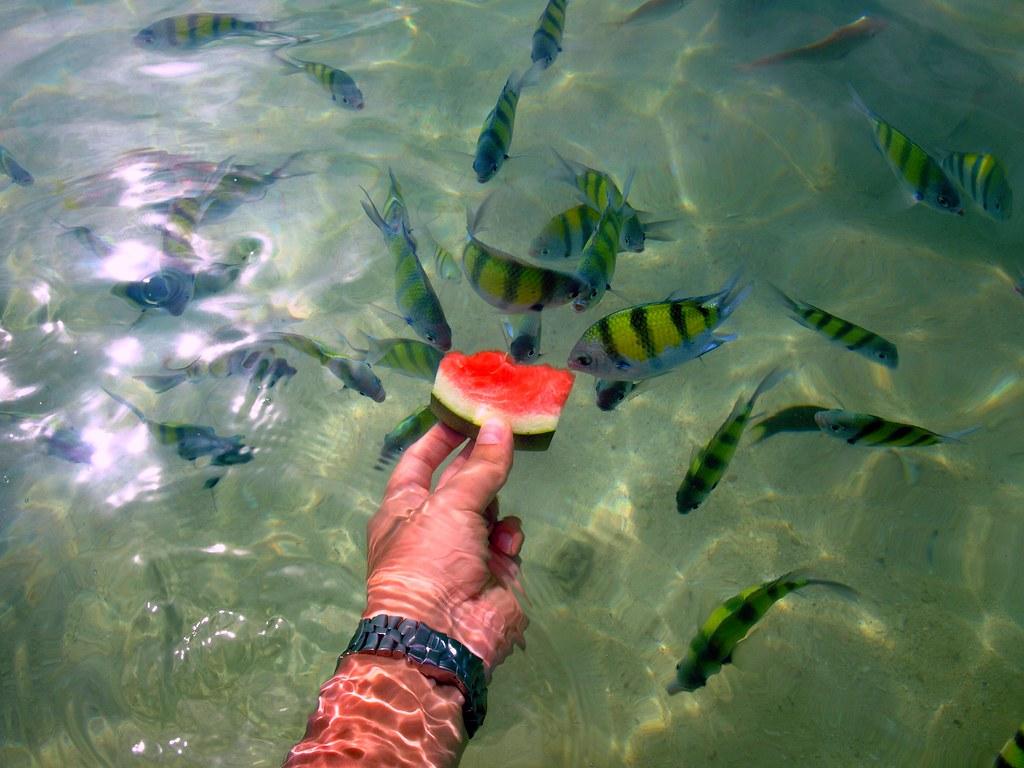 khai nai island phuket tropical fish pretty amazing as t flickr