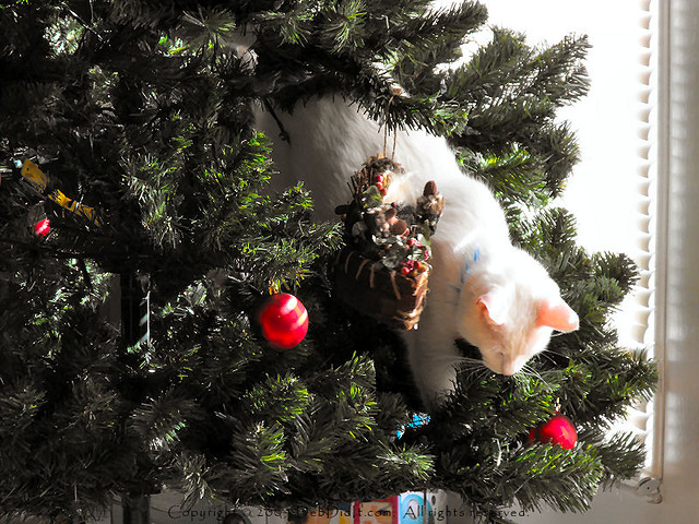 bob helping to take down christmas tree by debdidit - When To Take Down Christmas Tree