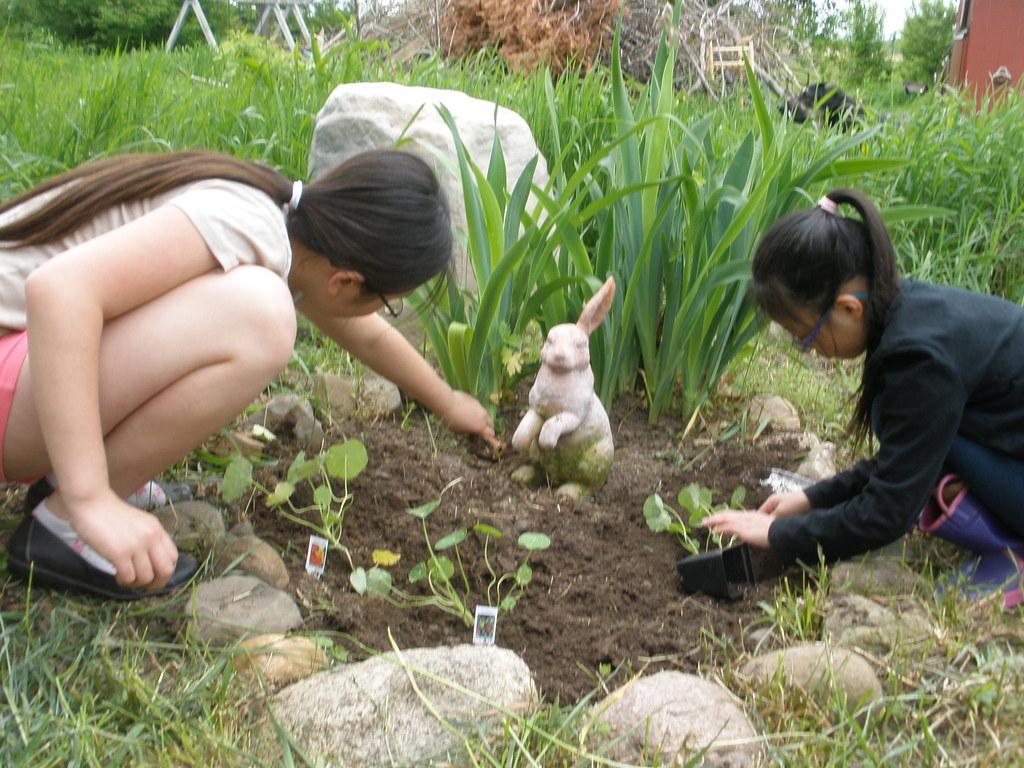 Planting Nasturiums