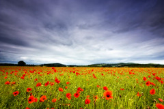Poppies & Malverns | by catkins.mayhill