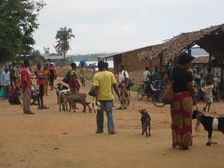 Le commerce des ch vres se portent bien radio okapi flickr for Portent jobs