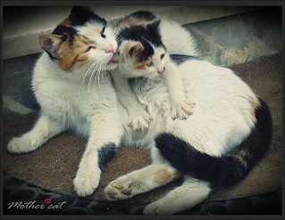 Mother cat & naughty baby | by tulayyorguc