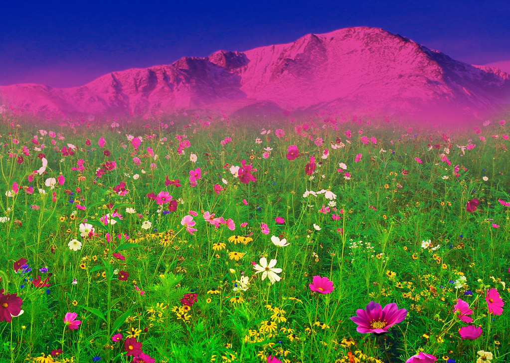 A field of flowers in front of the rocky mountains pikes flickr a field of flowers in front of the rocky mountains pikes peak colorado springs mightylinksfo