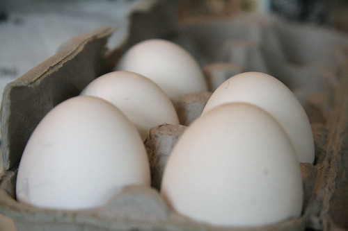 Eggs in the Carton | by Ivy Dawned