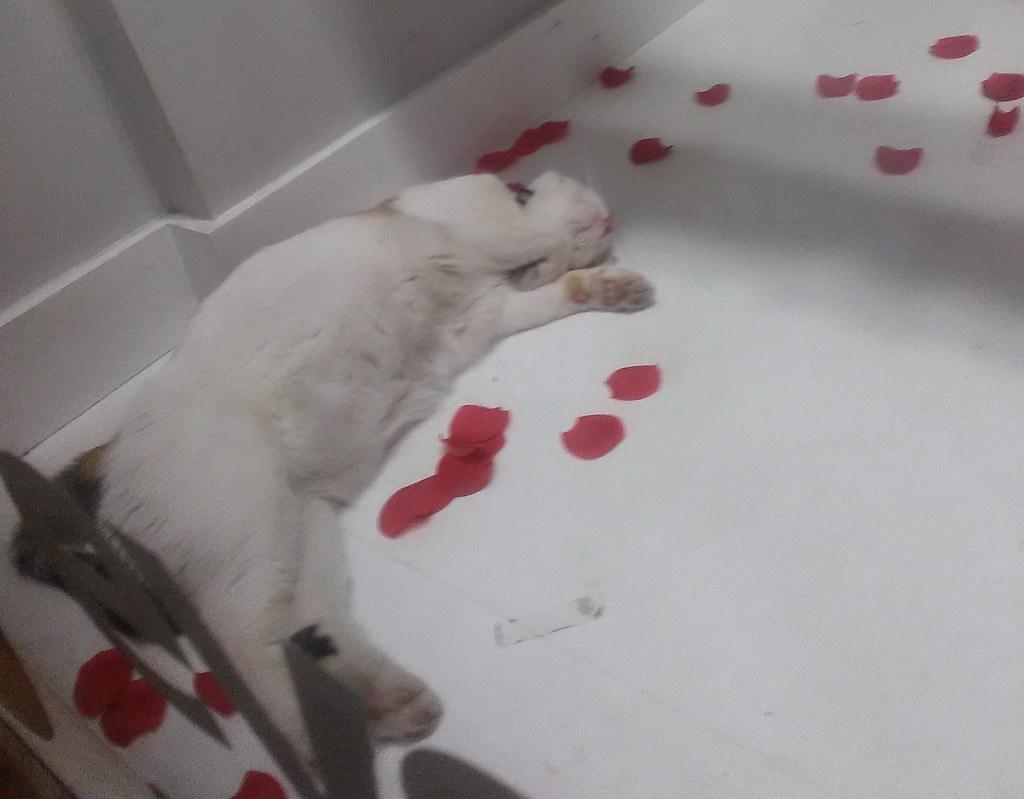 家居装饰店养的一只猫,每次路过,不是睡觉就是蜷缩在某个器物旁,像极了书中对慵懒女人的描写