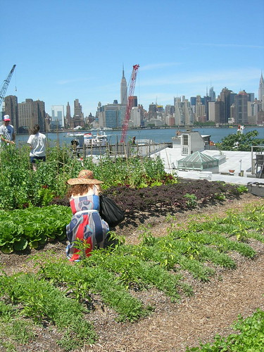 Rooftop Farm in Greenpoint | by Your Secret Admiral