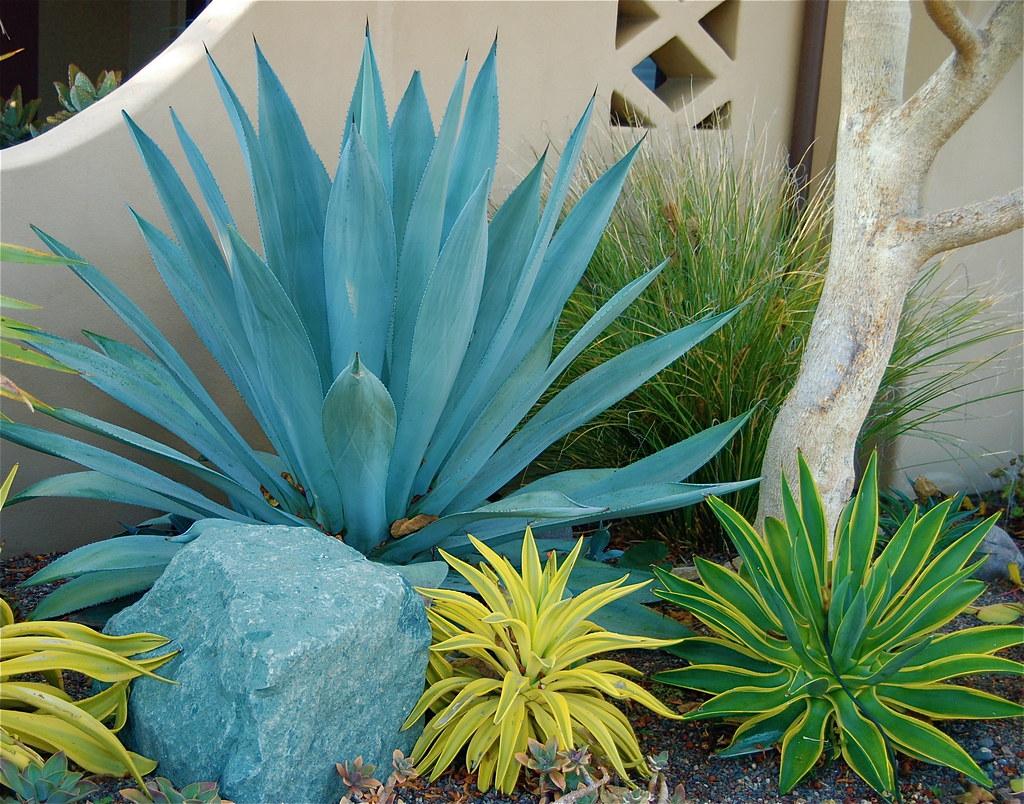 Blue Agave Landscape Design