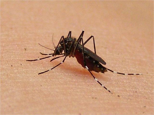 Fijaos en el tamaño de esos mosquitos