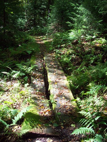 100_6290 Log bridge, Gaudineer Virgin Red Spruce Trail, Po ...