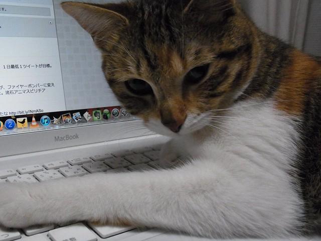 マカーな猫