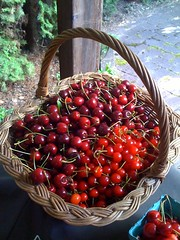 Life is a basket of cherries | by AnyaLouisa
