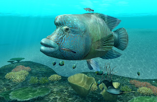 FOREVER BLUEお魚図鑑ナポレオンフィッシュ