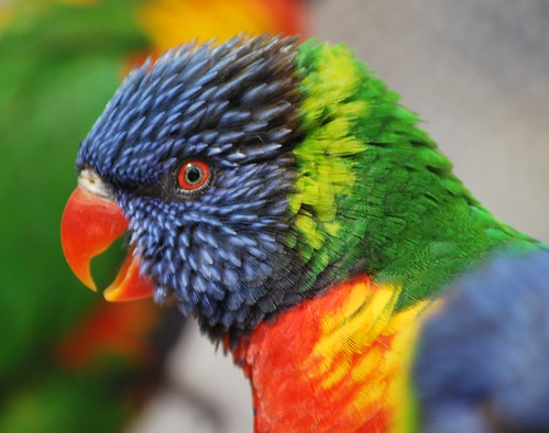 Lory | by foqus