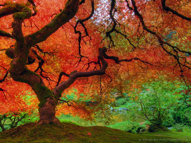 Autumn Colors At Portland Japanese Garden Click Here To