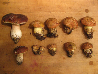 boletus2 | by Green Kitchen