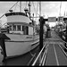 Fishing boats in Steveston Harbour