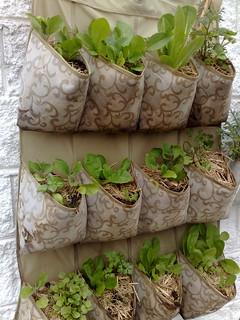 vertical garden sept | by lyrebirdcreate (kate)