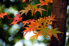 Autumn colors in my neighborhood | by naruo0720