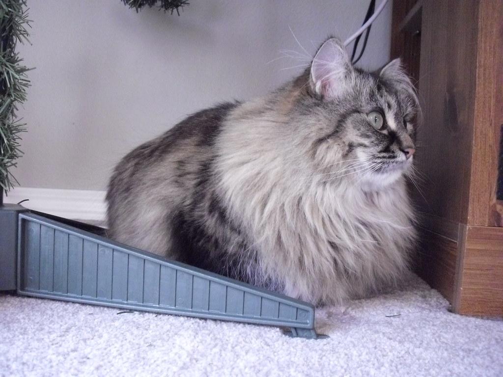 Cat Keeping Christmas Presants Advert