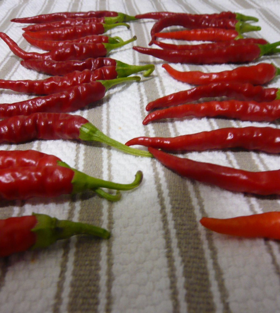 feasibility of cayenne pepper capsicum annuum Bird pepper, capsaicin, capsaïcine, capsicum annuum, capsicum capsicum pubescens, cayenne chili pepper, is an herb the fruit of the capsicum plant.