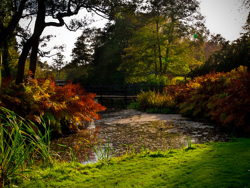Pond at Autumn | by wwarby