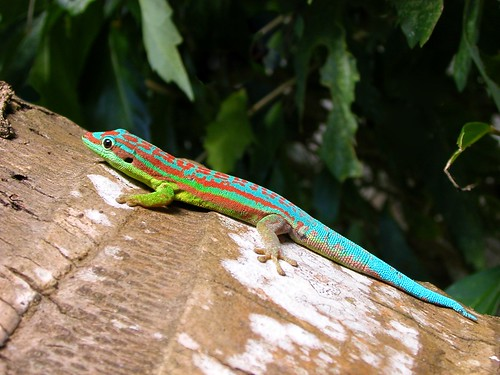 gecko | by Oregon State University