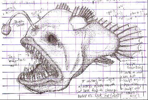 Angler Fish Diagram Reinvent Your Wiring Diagram