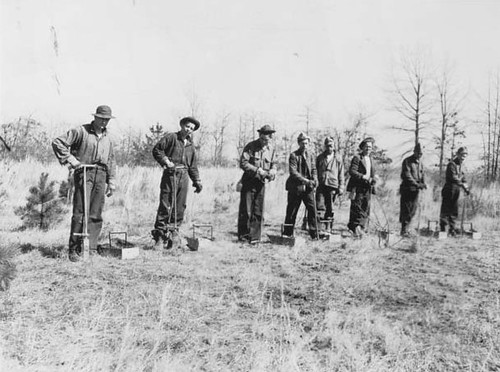 CCC crew planting trees. | Caption: In the 1930's much of