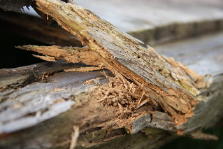 Rotten Wood | by alex_smith1