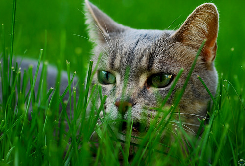 Sneaking A Cat Into A No Pet Lease
