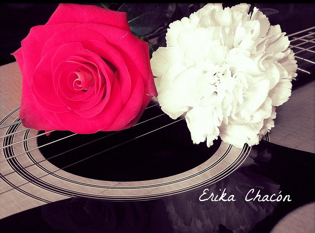Resultado de imagen para amor clavel y rosa