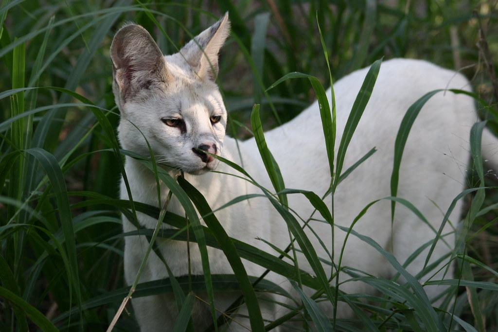 White Cat Rescue