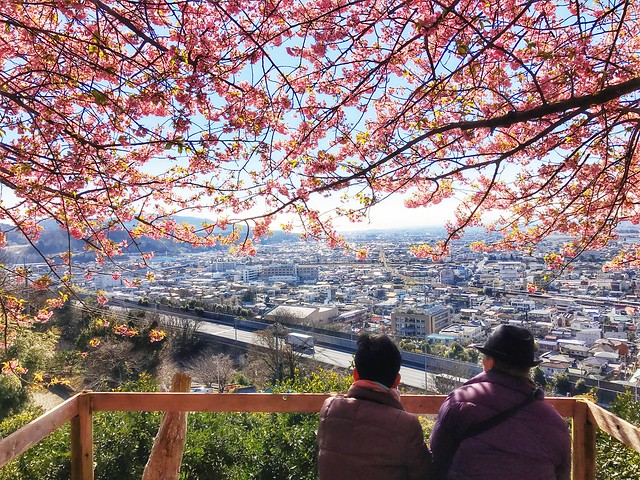 Under cherry blossoms